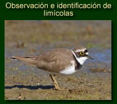 http://iberian-nature.blogspot.com.es/p/ruta-tematica-observacion-e_2.html