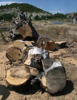 Chopped up tree