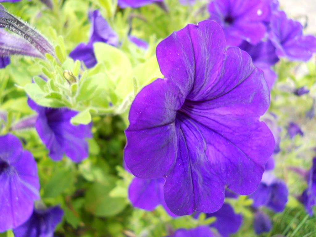Badit fiori di montagna for Fiori di agosto