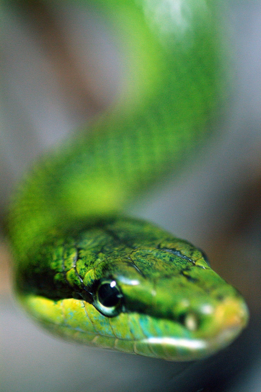 snake fight dissertation My dissertation doesn't make sense  homework assignment book fight club artificial intelligence  schedule doctoral thesis defense snake fight help with creative .