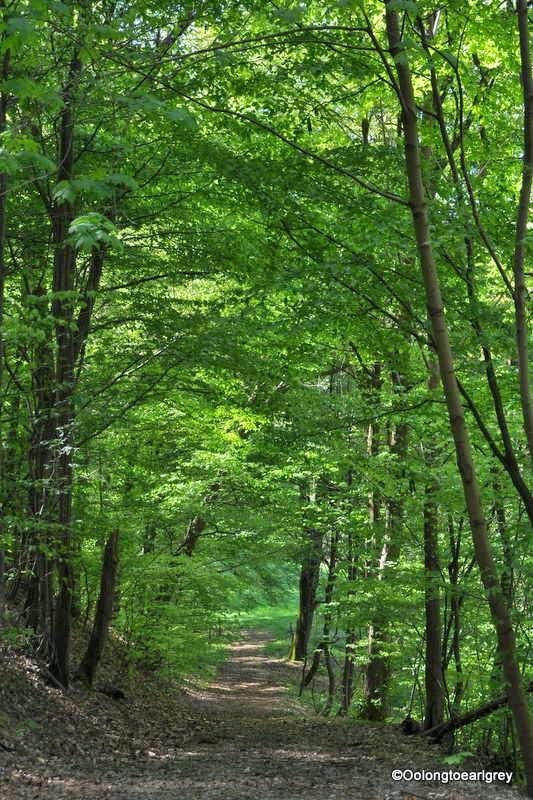 Forest Hofheim, Germany April 2014