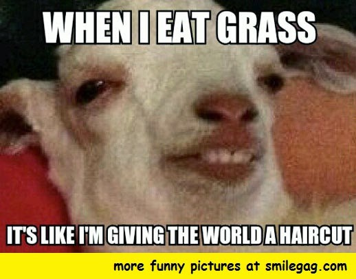 Funny Meme To Cheer Someone Up : Goat memes to cheer you up