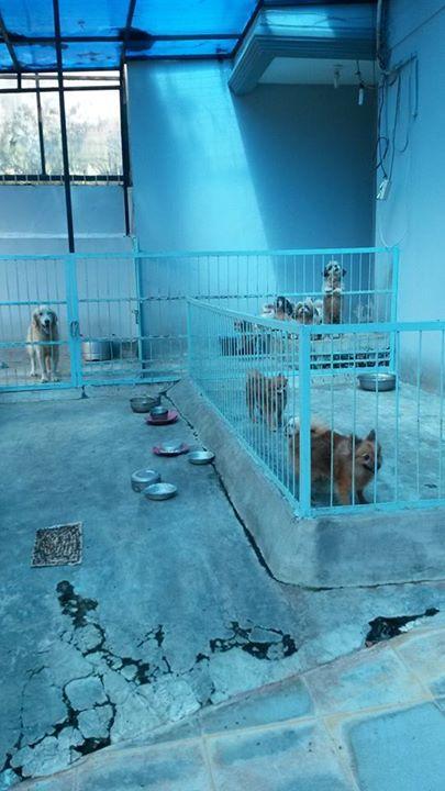 Breeder Pabrik Puppy