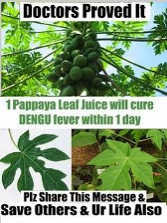 Papaya Leaf Juice for Dengue