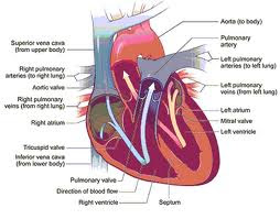 Nanda Nursing Diagnosis for Rheumatic Heart Disease