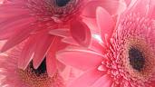 #3 Greatest Flowers Wallpaper HD