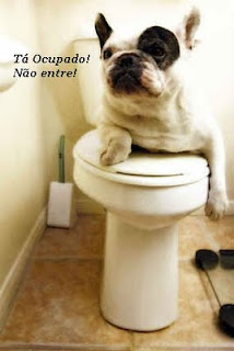 french bulldog- banheiro