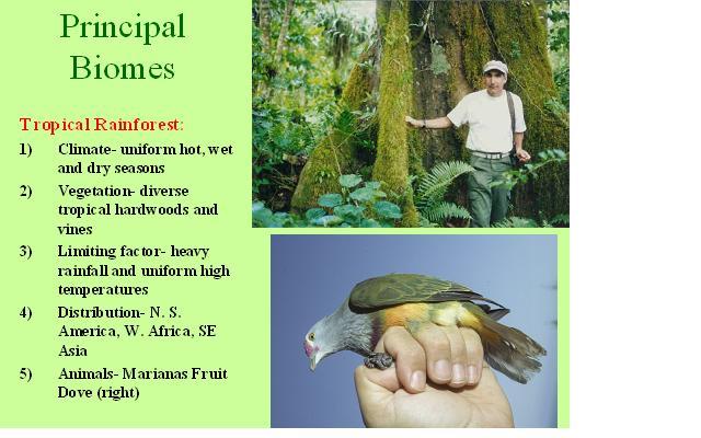 ap environmental science essay