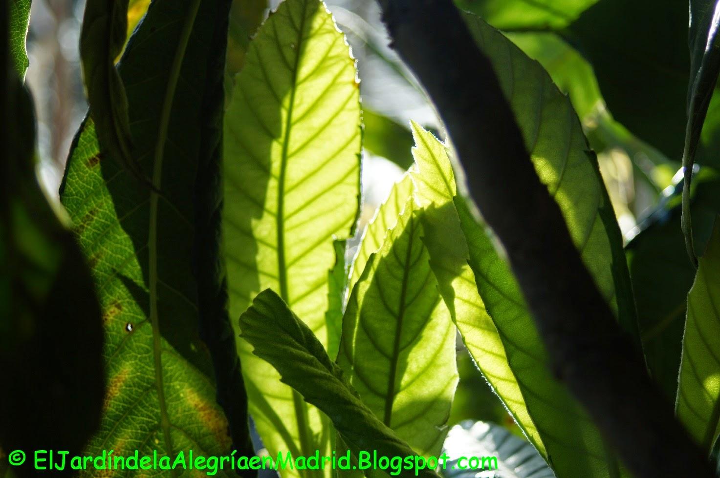 El jard n de la alegr a peque as cosas verdes for El jardin de la alegria cordoba
