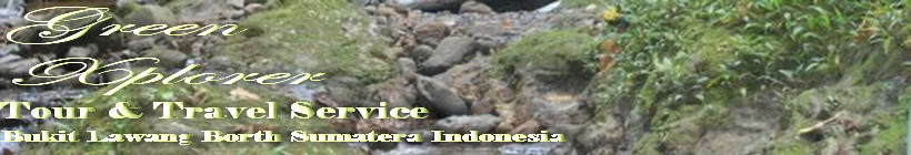 BuKit Lawang l Tour & Travel l Green Xplorer