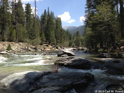 Merced River, Wawona, Redwoods In Yosemite