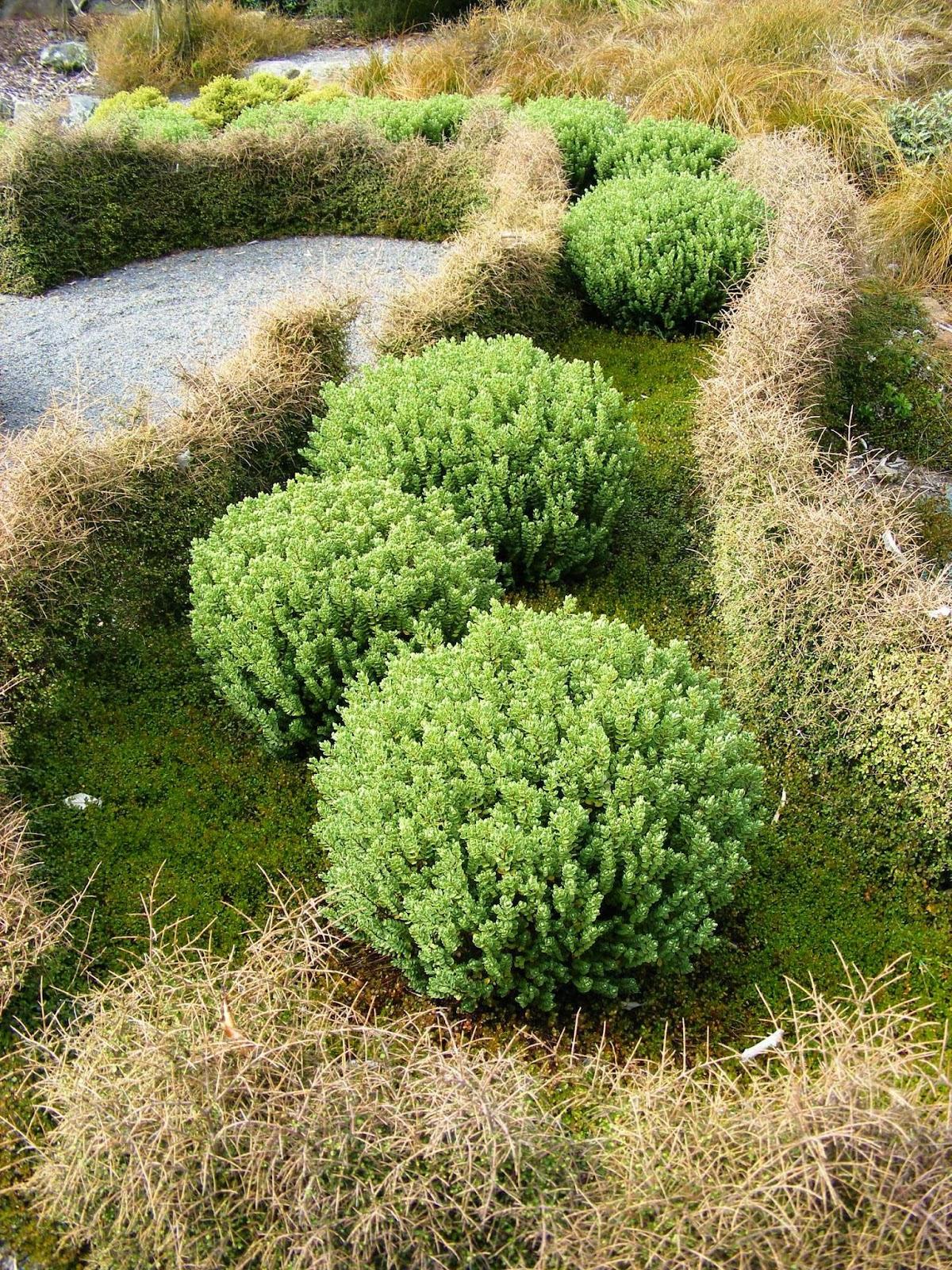 Rachel callaghan landscape architect nz otari wilton 39 s for Landscaping wellington