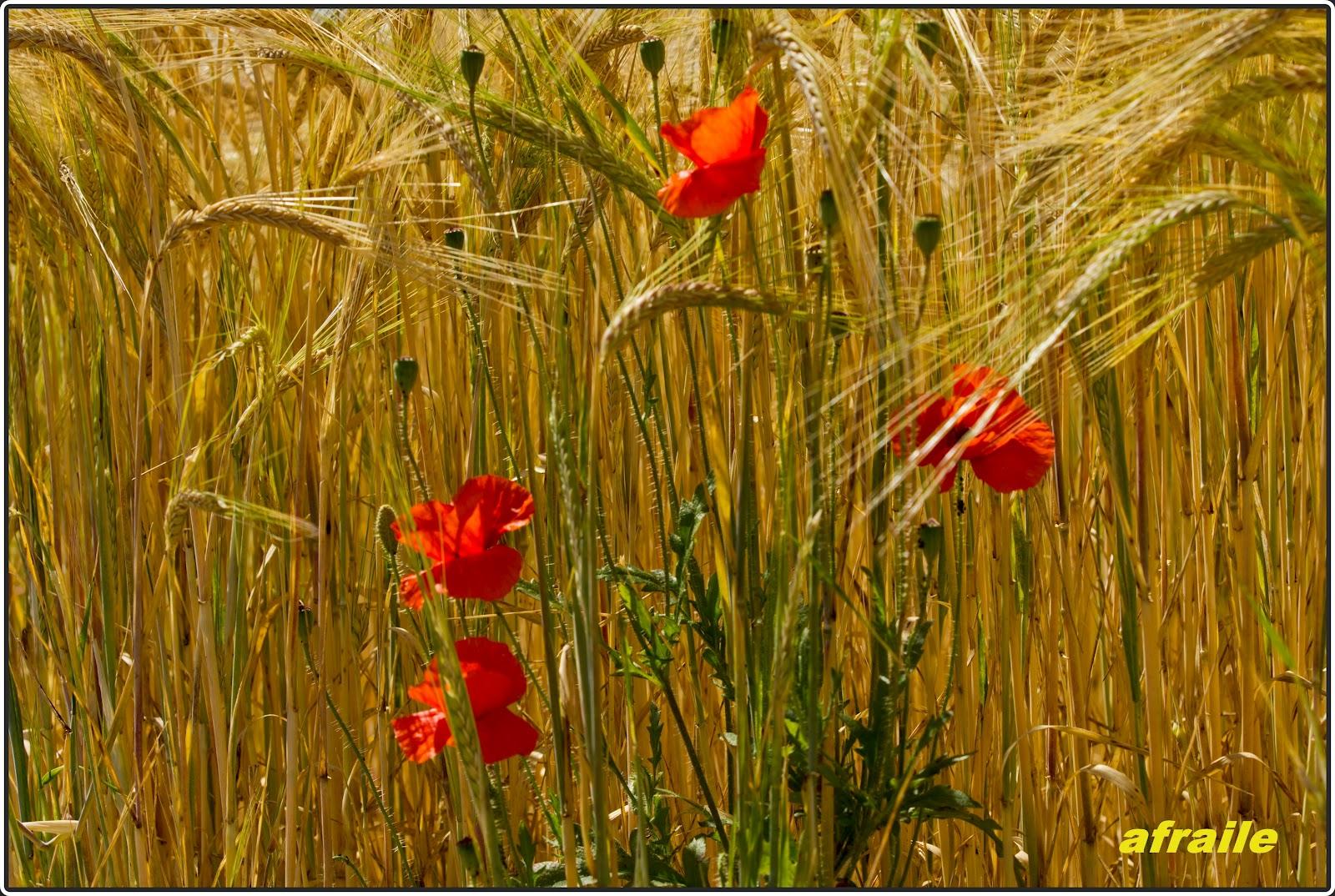 Mi album de fotos albacete jard n bot nico for Jardin botanico albacete