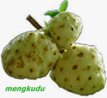 manfaat buah mengkudu untuk kesehatan