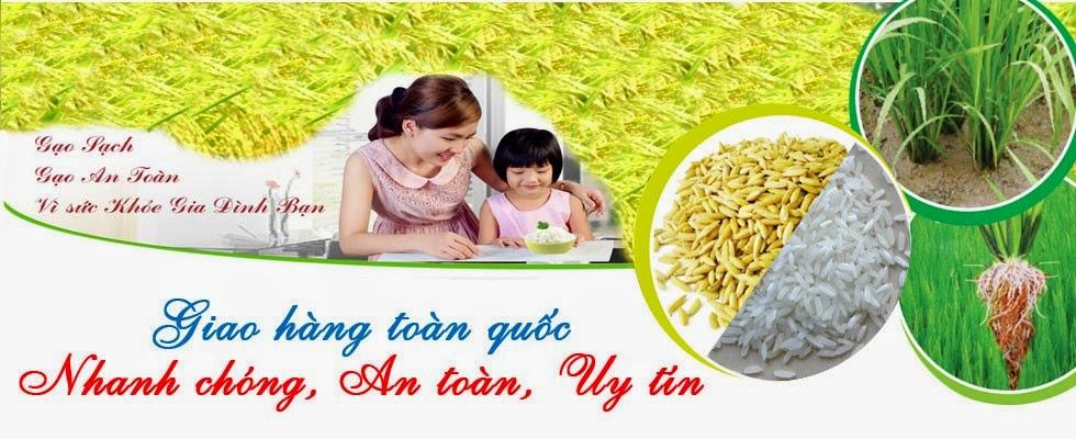 gao-mam-vibigaba-ban-o-dau-uy-tin-chat-luong