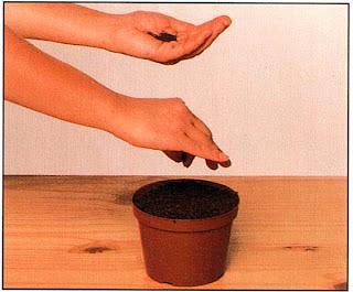 Равномерно посейте семена, что легче сделать, посыпая их как соль указательным и большим пальцами