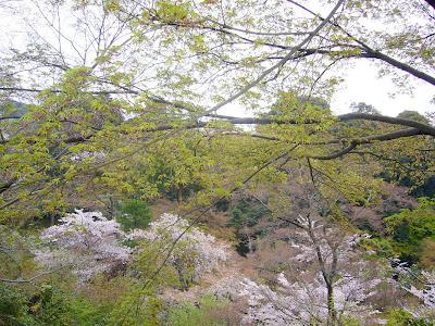 京都市・音羽山 清水寺