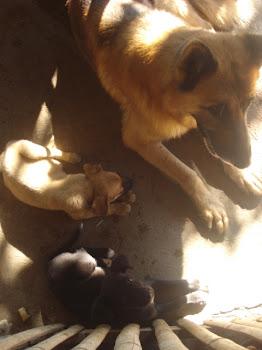 Scooby, Amarillito, y Negrita