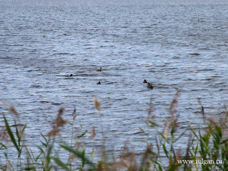 Озеро Сладкое. Челябинская область.