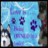 http://ownedbyahusky.blogspot.com/