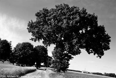 listerlandet, väg, träd, alle, blekinge, natur, foto anders n