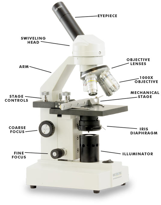 Worksheets The Compound Microscope Worksheet compound light microscope worksheet vintagegrn collection of bloggakuten
