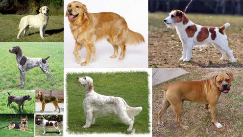 Dogs Breeds and Puppies Reviews