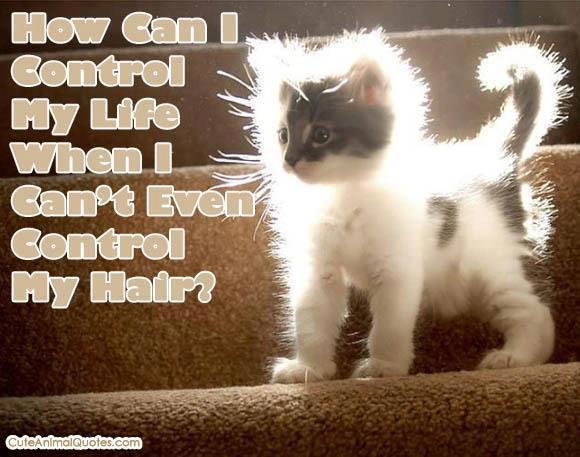 tgif funny animals - photo #33