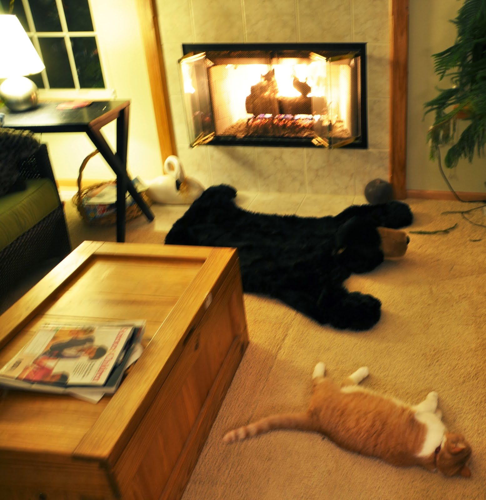 Sad News…Sparky, The Camp Cat Has Died