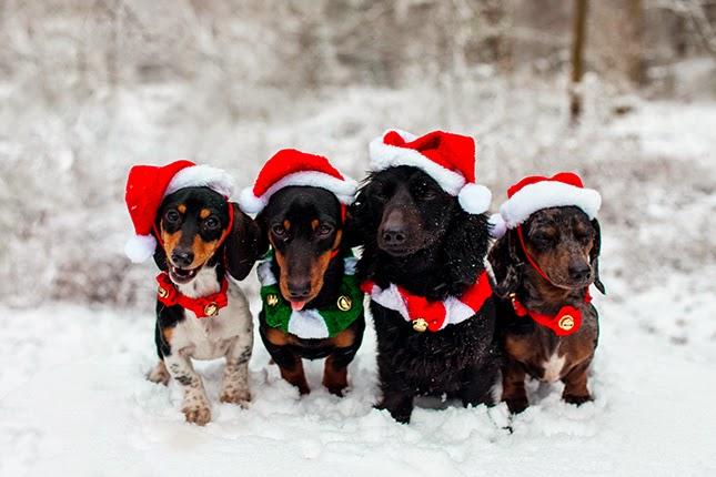 10 Trajes de Navidad para Mascotas