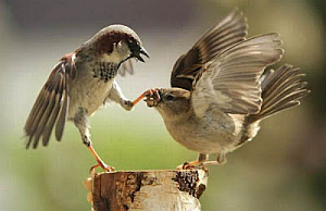 Imágenes Graciosas, Aves