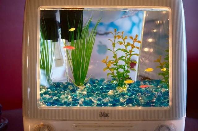 Tái sinh màn hình cũ iMac thành những bể cá sống động