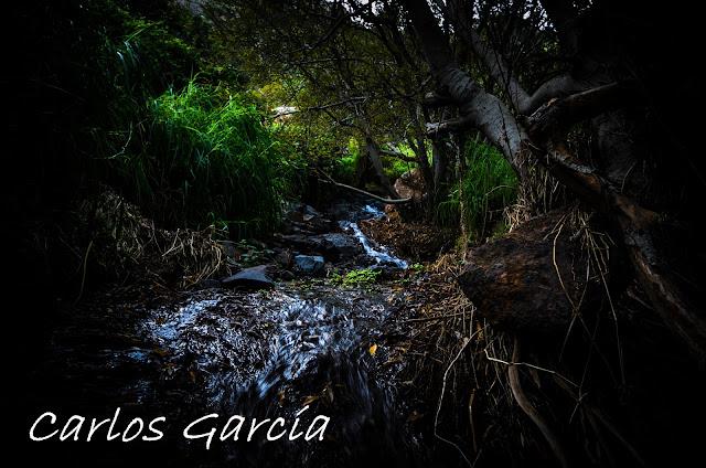Bosque encantado en Tenerife