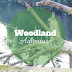 Woodland Adventure - Roundhay Park
