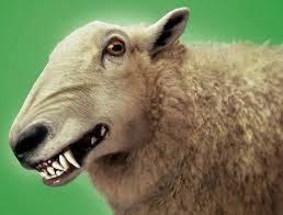 False teachers prohibit foods - wolf sheep clothing