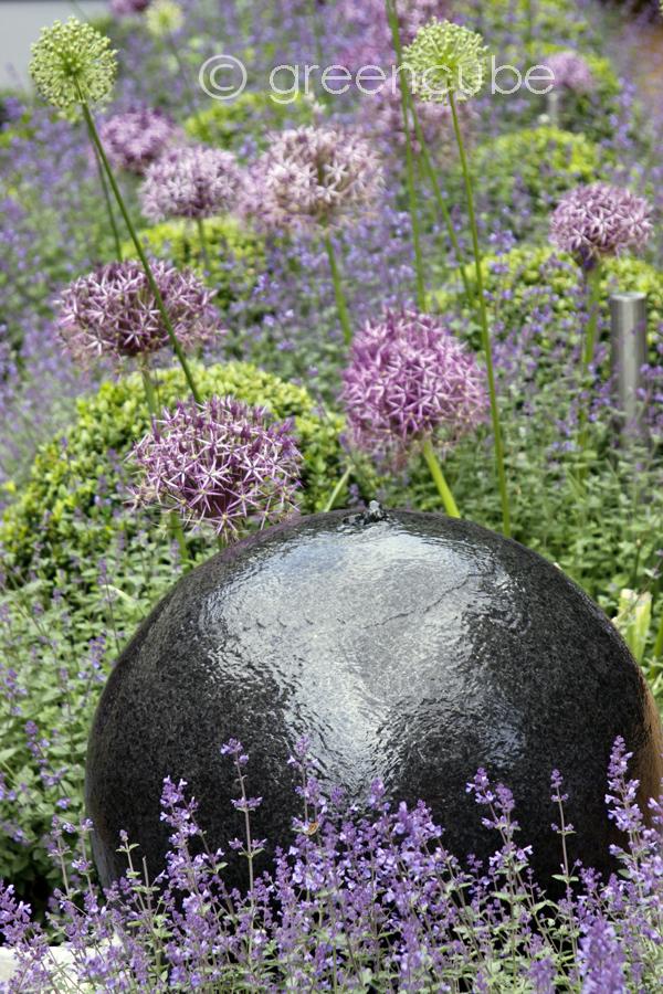 greencube garden and landscape design uk purple fuzz