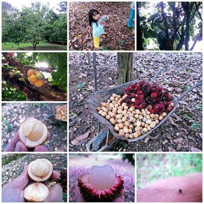 Aktiviti Di Kebun Buah-buahan