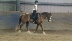 Carol and Taz, Dressage 2013!