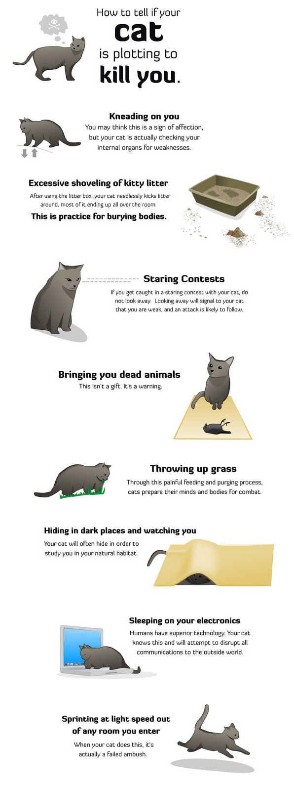 how to tell if your cat& 39