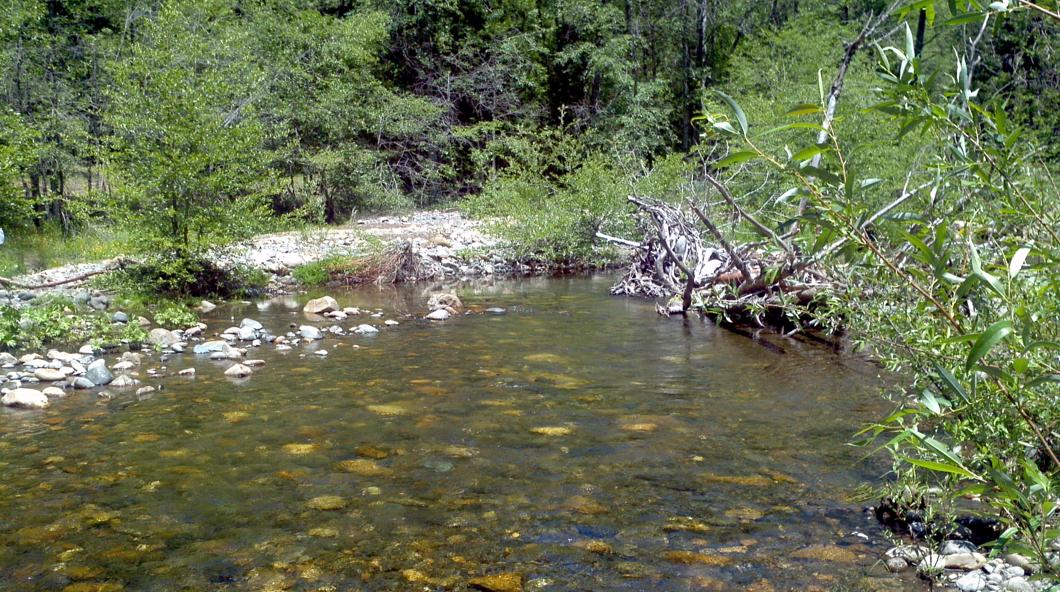 Virtual fly guides beaver creek ca fly fishing report for Beaver creek fly fishing