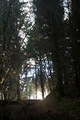 mike-burn woods