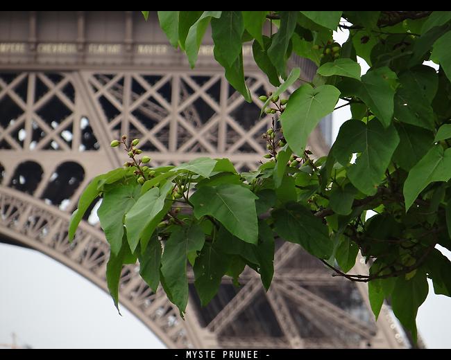 Gallerie Photo [Myste Prunee] DSC00280