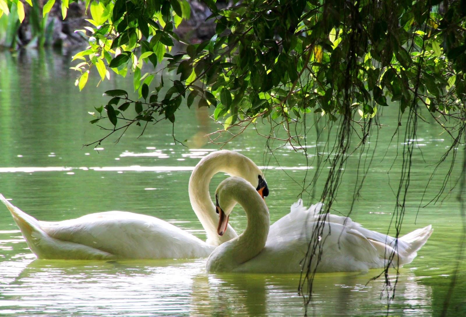 how to go to singapore botanic gardens