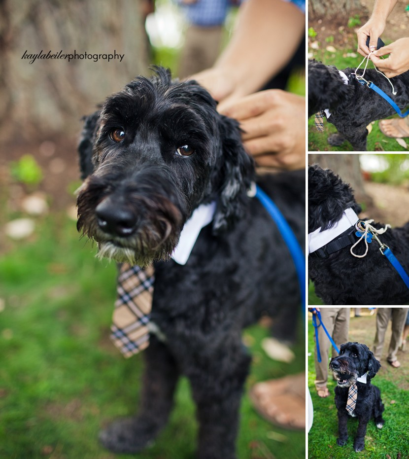 dog as ring bearer photo