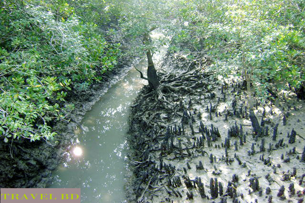 Picture of Sundarban
