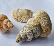 Sprial Shells
