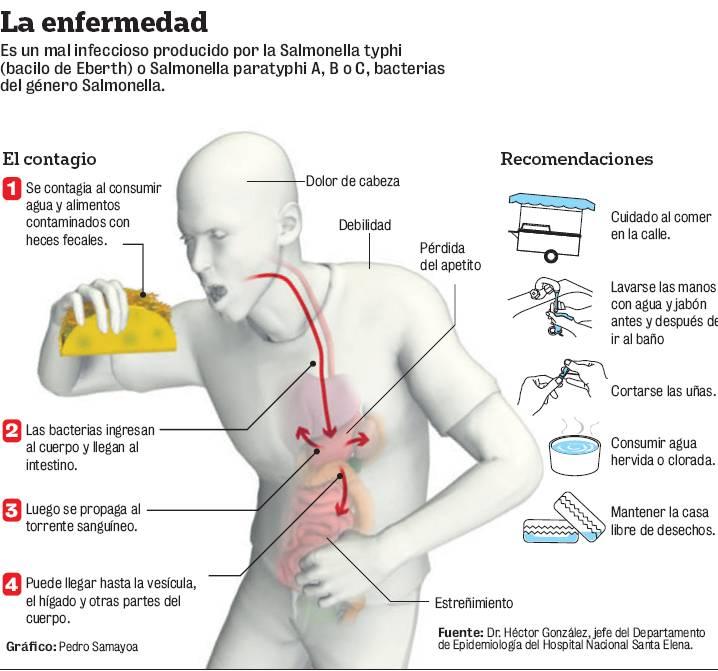 Los novísimos medios de los parásitos en el organismo de la persona