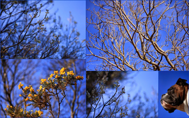 collage of images with blue tones, sky, branches, trees