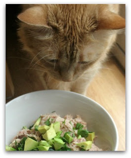 madison the cat and tuna salad