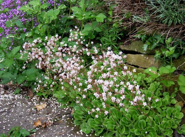 Margaret cooter poetry thursday the very leaves of the for Low maintenance garden plants uk